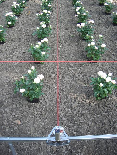3C,-[Running-Lines]-Querbeet,-Vorgebirgspark,-Koeln-2005
